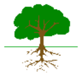 Tree_branches_and_roots_01